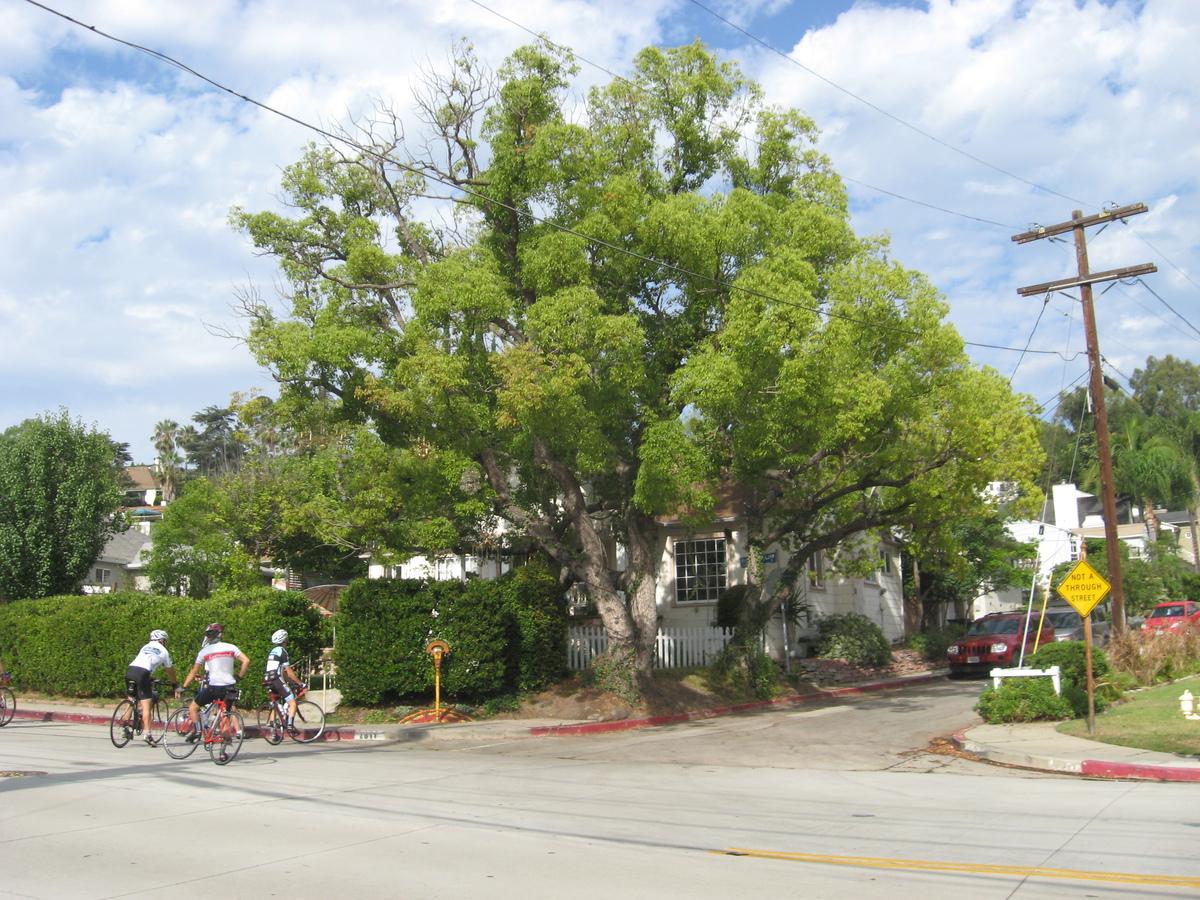 Stan\'s Obligatory Blog » The Chandelier Tree