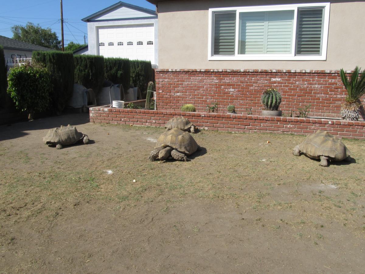stan u0027s obligatory blog the tortoises of burbank